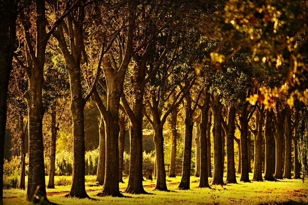 row-of-trees-what-is-a-windbreak-stein-tree-service