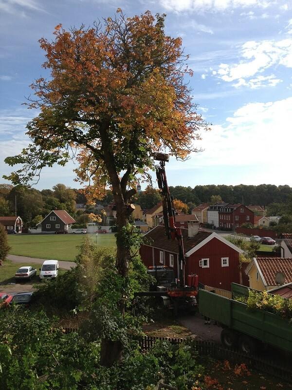 Lift truck with tall tree | trim tall trees | Stein Tree Service