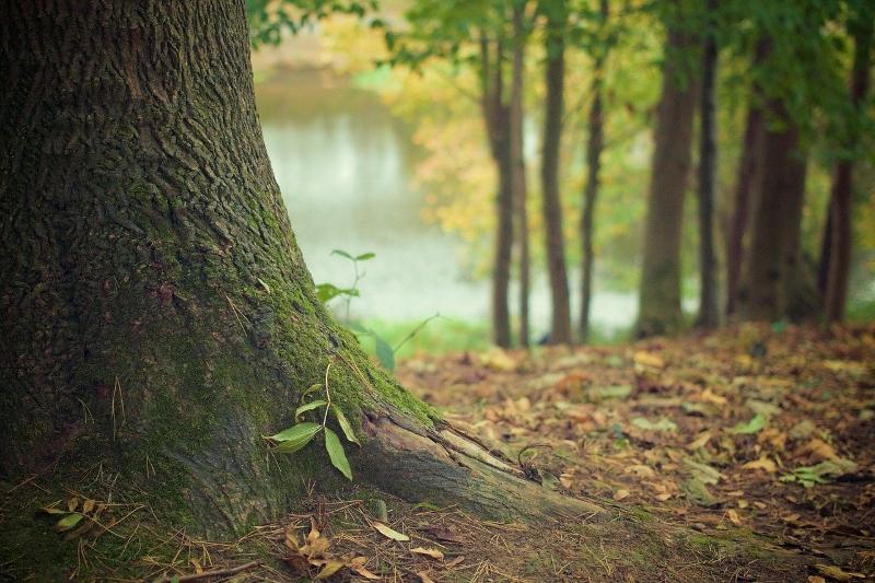 Photo of tree trunk | Proactive Tree Maintenance | Stein Tree Service