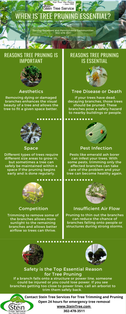Tree Pruning is Essential - Stein Tree Service Infographic