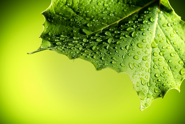 Close-up photo of leaf with water on it | Transpiration in Trees | Stein Tree Service