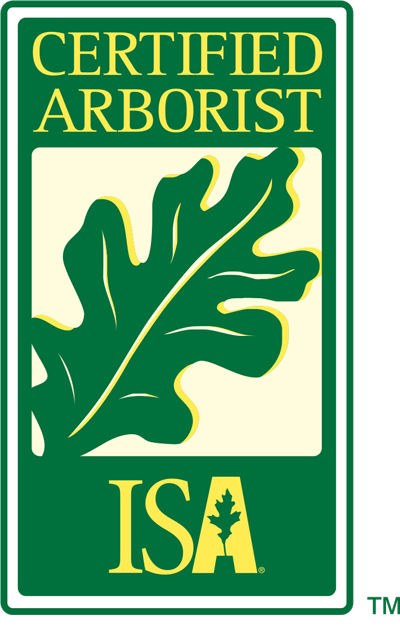 Certified arborist inspecting a tree | arborist is isa certified | Stein Tree Service