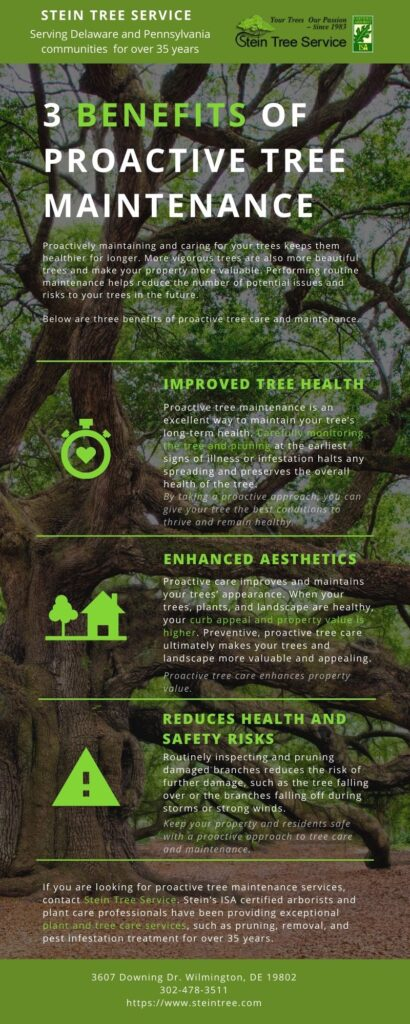 3 Benefits of Proactive Tree Maintenance Infographic | Stein Tree Service