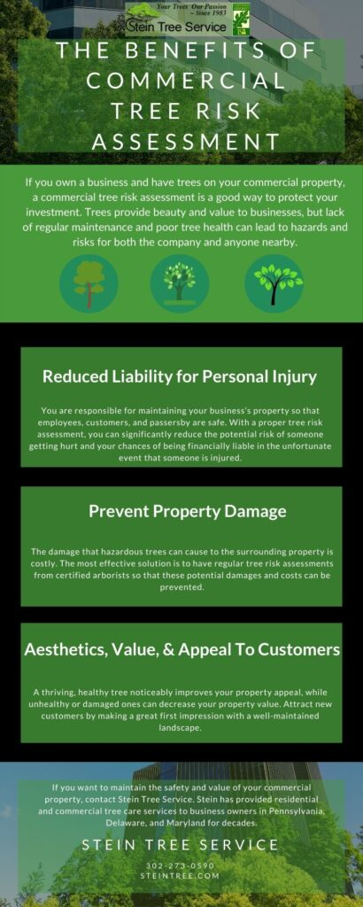 Infographic | Benefits of Commercial Tree Risk Assessment | Stein Tree Service