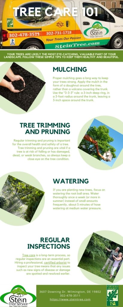 Tree Care 101 Tips | Stein Tree Service